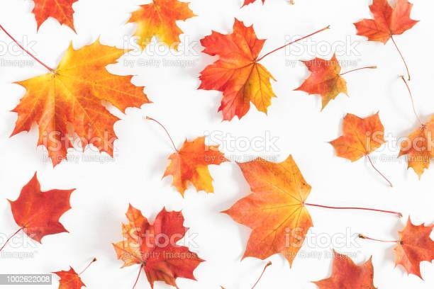 Photo of Autumn maple leaves on white background. Flat lay, top view