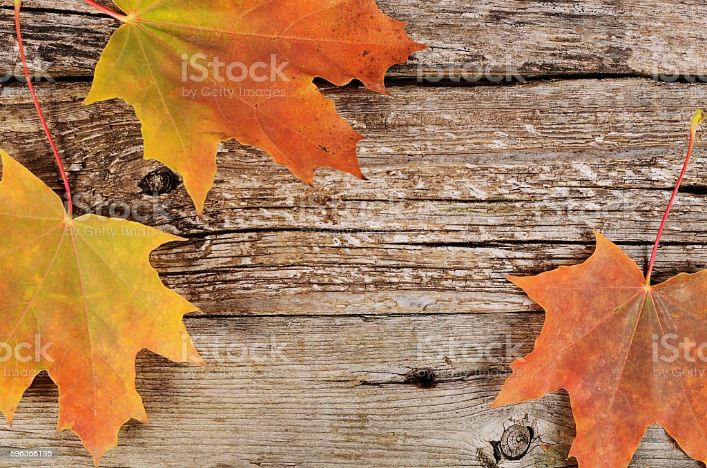 Autumn maple leaves on wooden background royalty-free stock photo