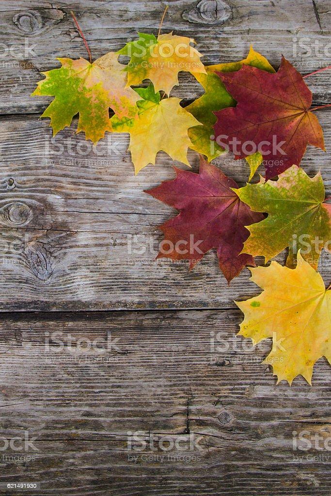 Feuilles d'érable automne  photo libre de droits