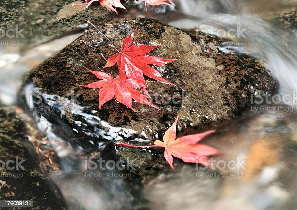 Photo of Autumn Maple Leaves with Flowing Water