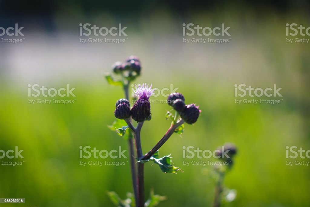 Autumn meadow plants foto de stock royalty-free