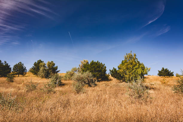 Autumn meadows and blue sky. The nature of Moldova. Landscapes of Moldova. Artistic processing with copy space stock photo