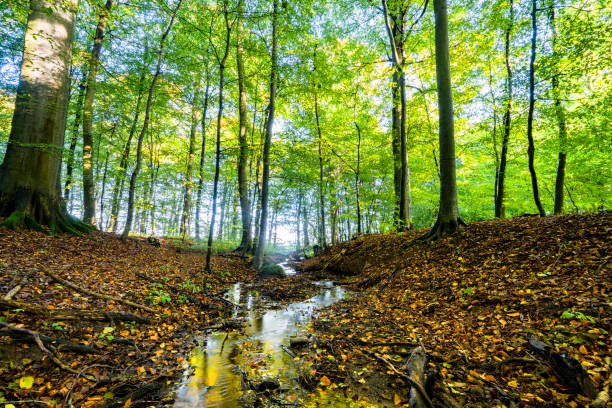 Autumn meeting spring in a green forest stock photo