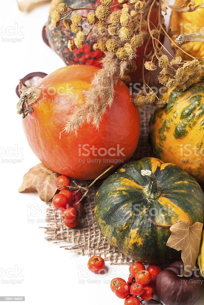 Autumn mini pumpkins royalty-free stock photo
