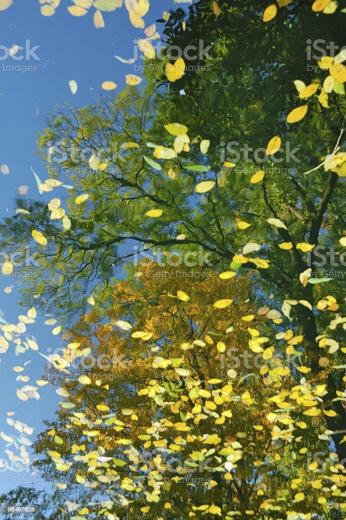 Autumn mirror royalty-free stock photo
