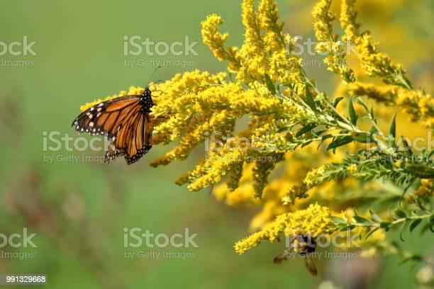 Photo of Autumn Monarch