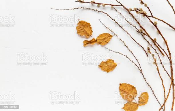 Autumn mood creative background copy space, dry branches on a white background. Top view