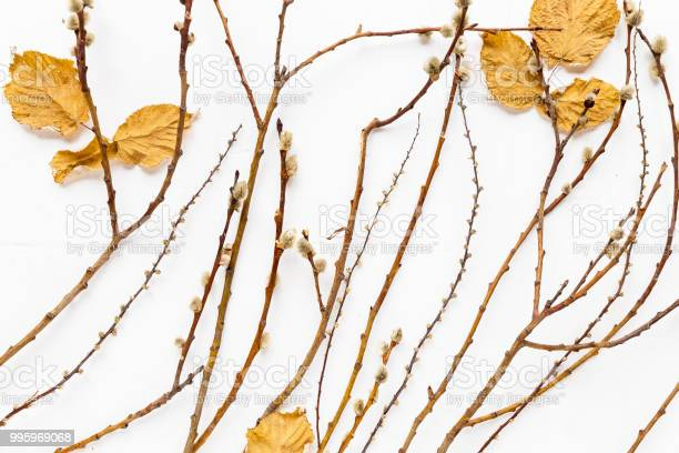Autumn mood creative background, dry branches on a white background. Top view