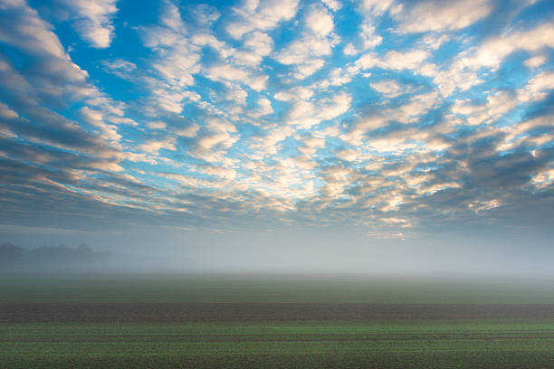 Autumn mood foggy field morning sunny clouds blue sky Morning mood, foggy rural scene in fall. Fog above a field with winter crop. Blue cloudy sky illuminated by the morning sun. Horizontal orientation. Altocumulus clouds. altocumulus stock pictures, royalty-free photos & images