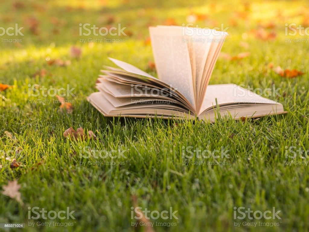 Autumn mood. Open book in the sunlight on the green grass. stock photo