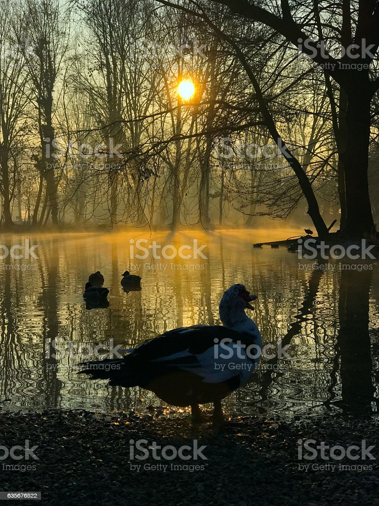 Autumn morning in a park stock photo