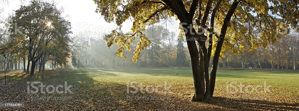 Autumn morning in the park royalty-free stock photo