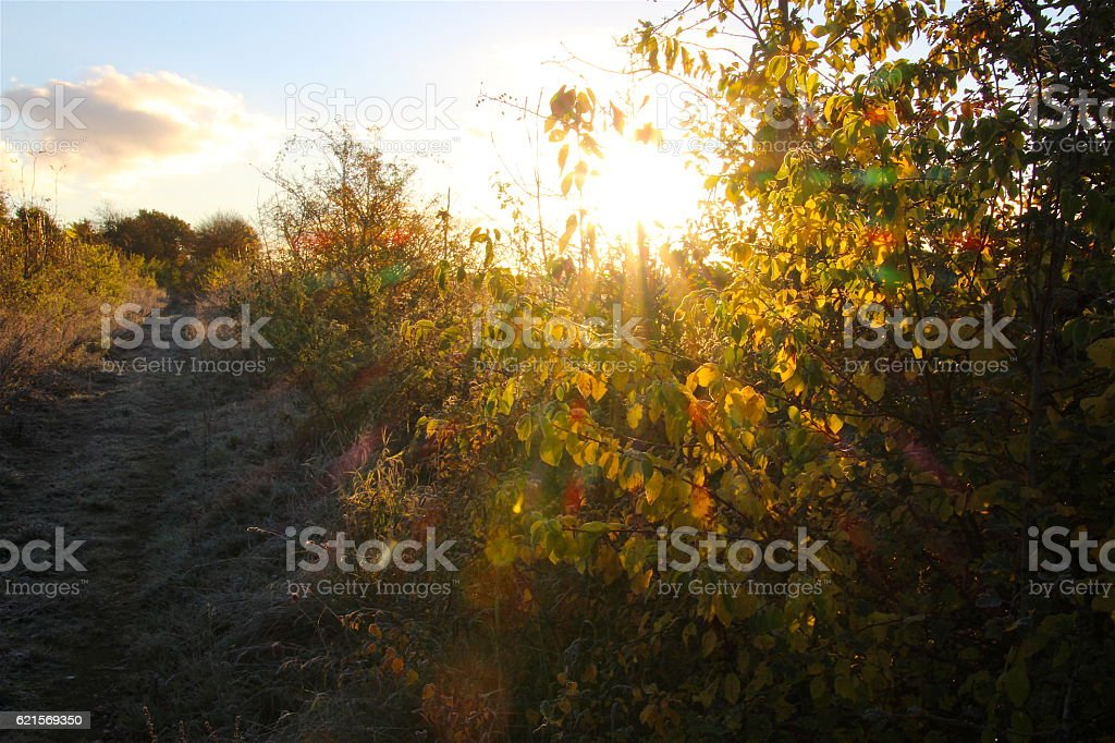 Autumn morning sun photo libre de droits