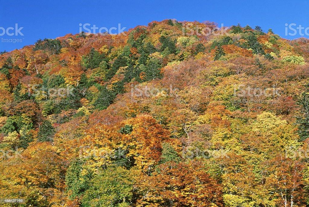 秋の山 ロイヤリティフリーストックフォト
