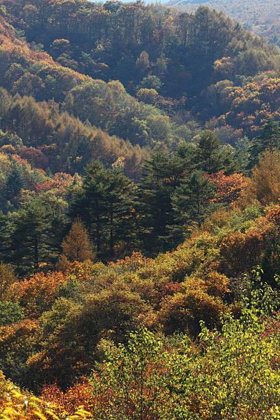 秋の山 ストックフォト