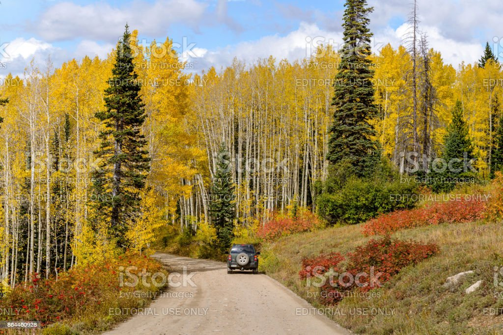 Autumn Mountain Road and Aspen Grove stock photo