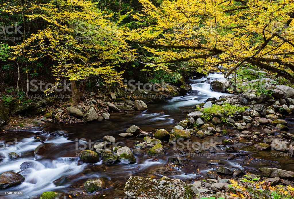 Autumn Mountain Stream royalty-free stock photo