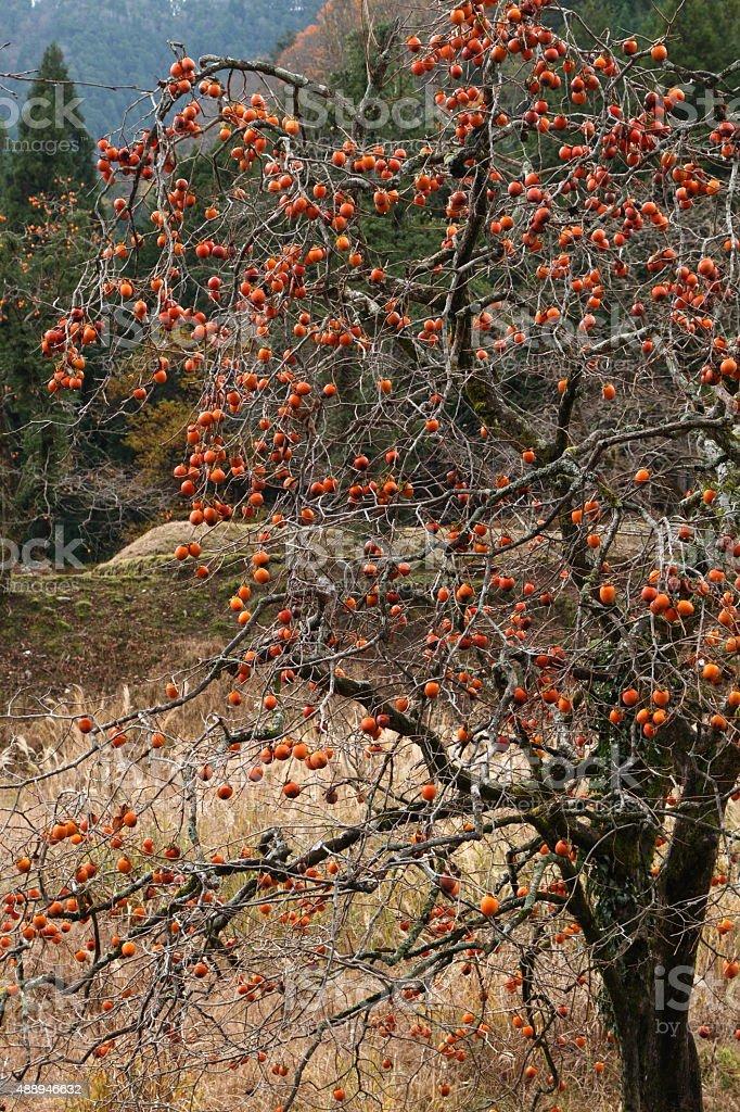 Autumn マウンテンヴィレッジ ストックフォト