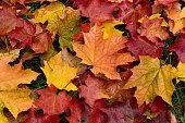 秋。色とりどりの落ち葉。