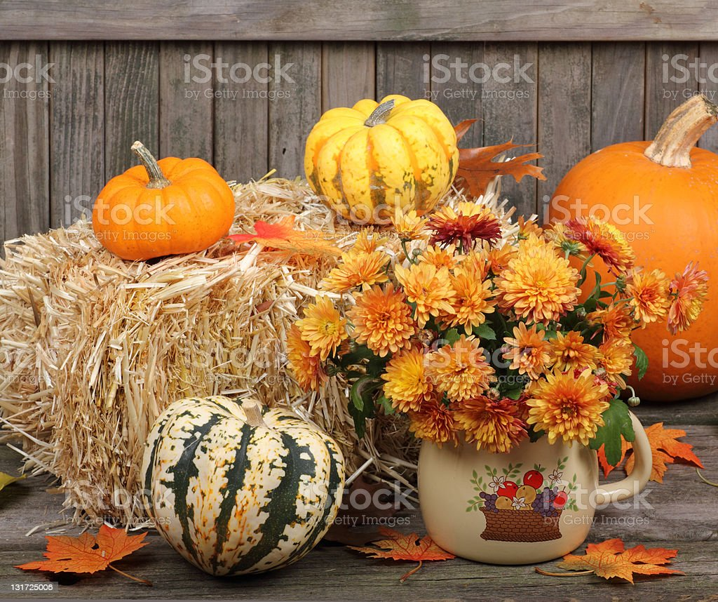 Autumn Mums and Gourds royalty-free stock photo