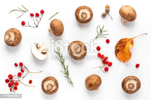 Autumn mushroom background. Fresh brown champignon mushrooms, red viburnum berries and autumn leaves on a white background, top view, flat lay.