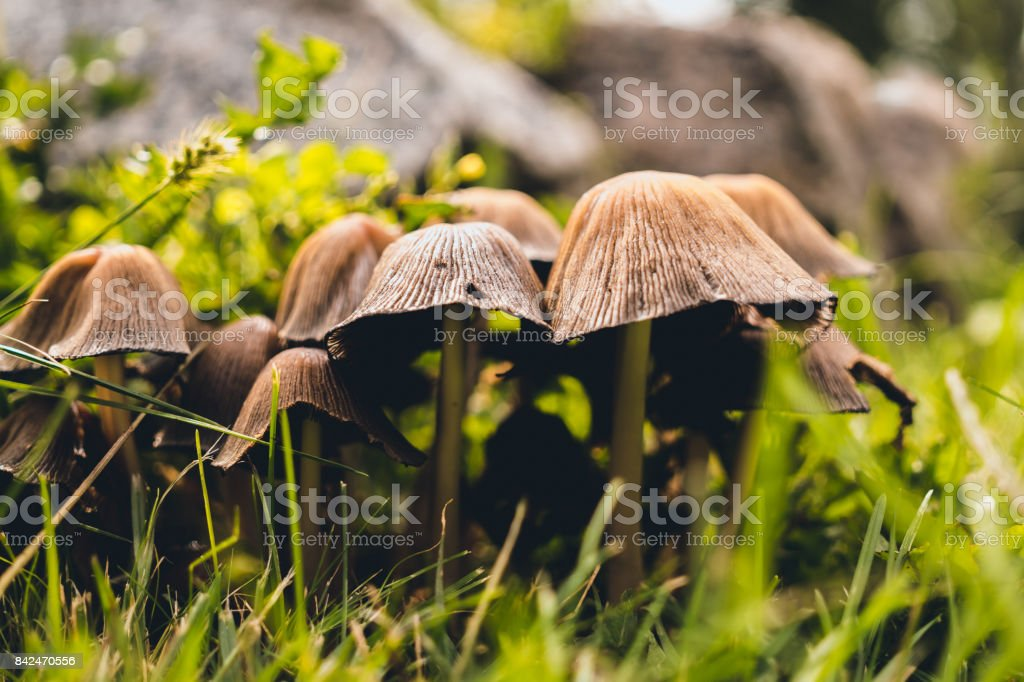 Autumn mushrooms in the garden. Protection of the environment stock photo