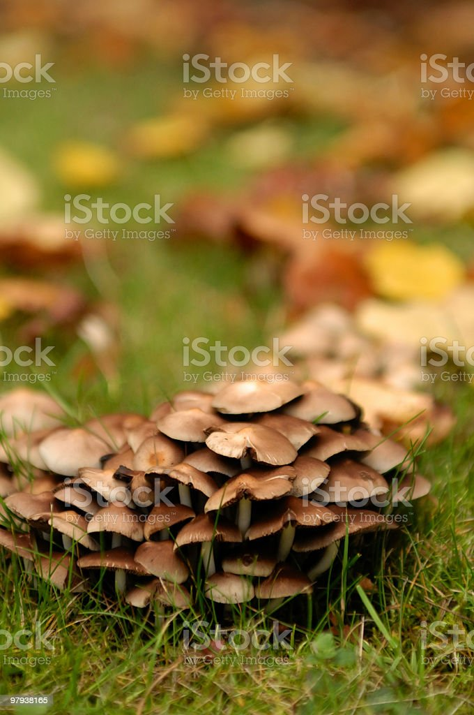 Autumn Mushrooms royalty-free stock photo