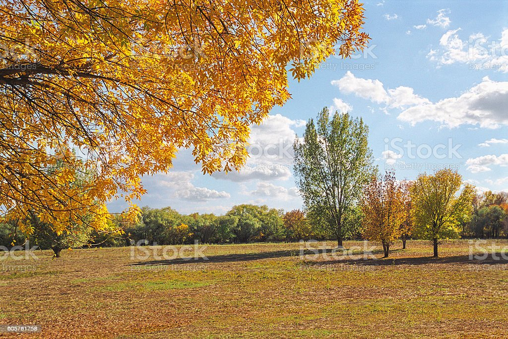 Autumn, nature in the Astrakhan region. Russia stock photo