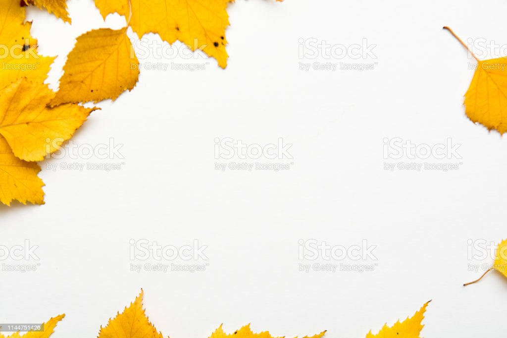 Autumn nature objects arranged with blank copy space and seasonal...