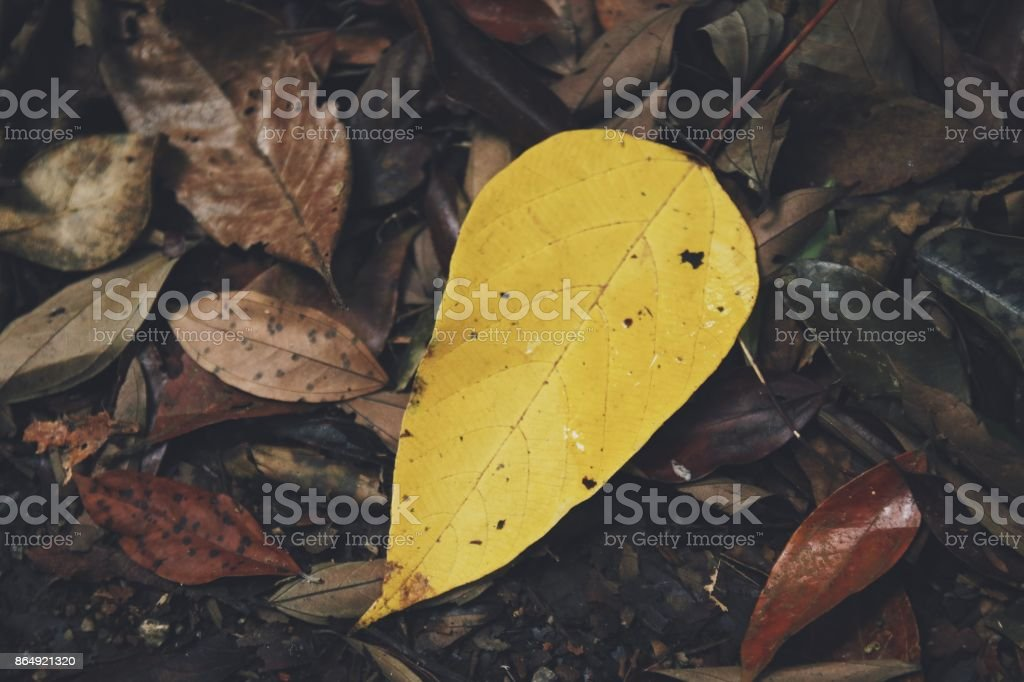 Autumn nature stock photo