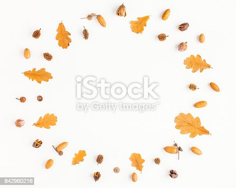 istock Autumn oak tree leaves, pine cones. Flat lay, top view 842960216