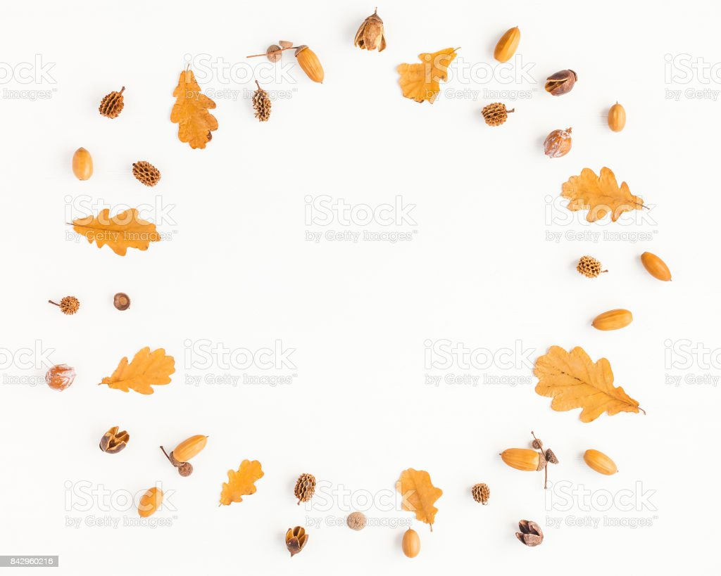 Autumn oak tree leaves, pine cones. Flat lay, top view stock photo