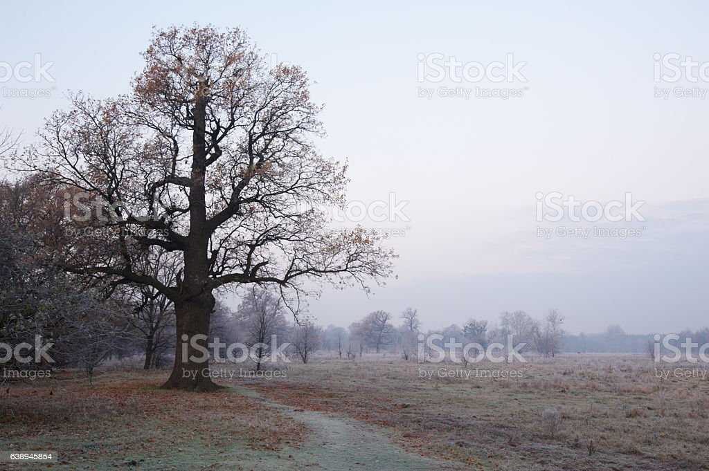 autumn oaks stock photo