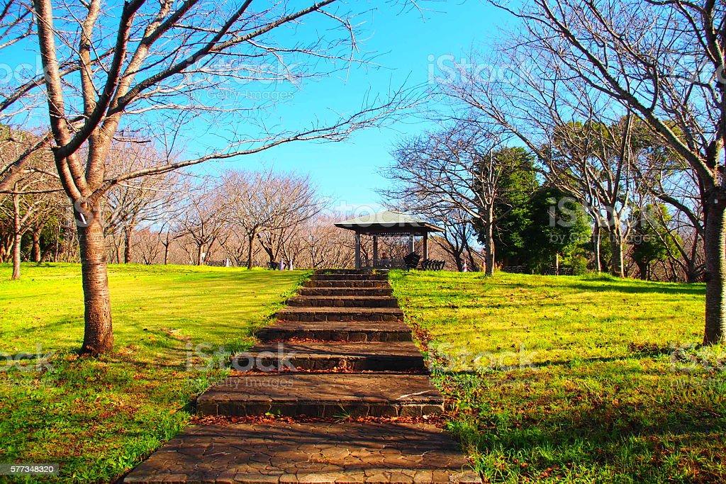 Autumn of Aobanomori Park Chiba Japan stock photo