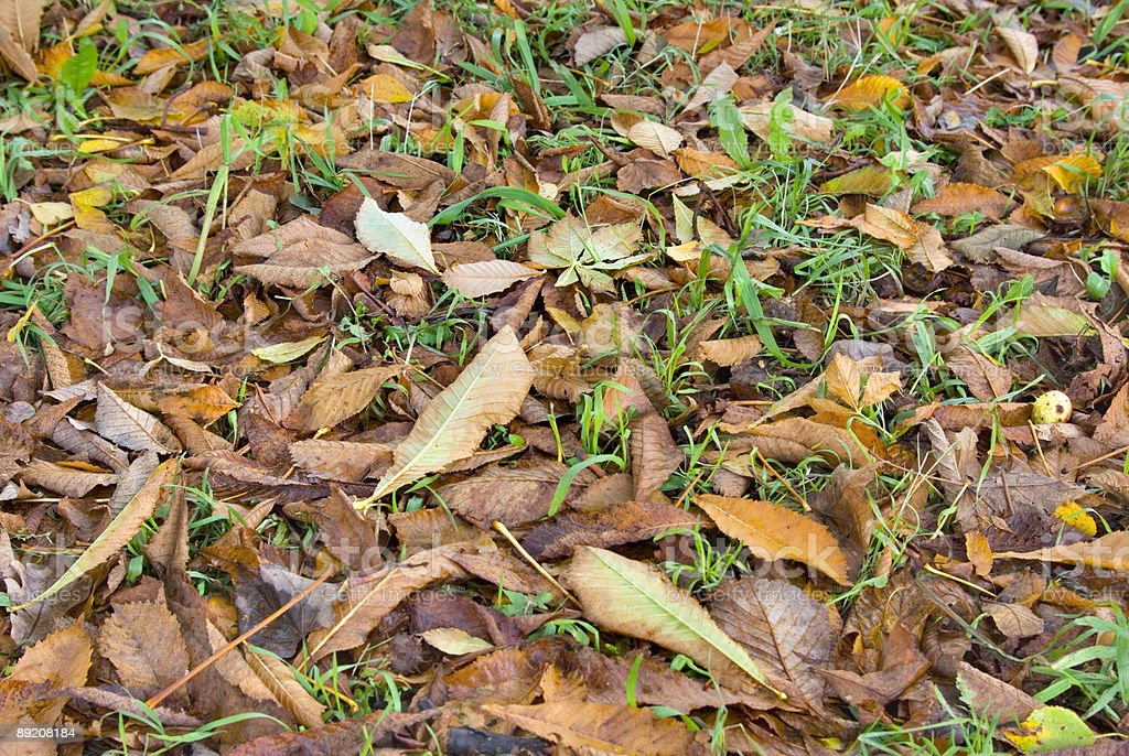 Autumn old leaves royalty-free stock photo