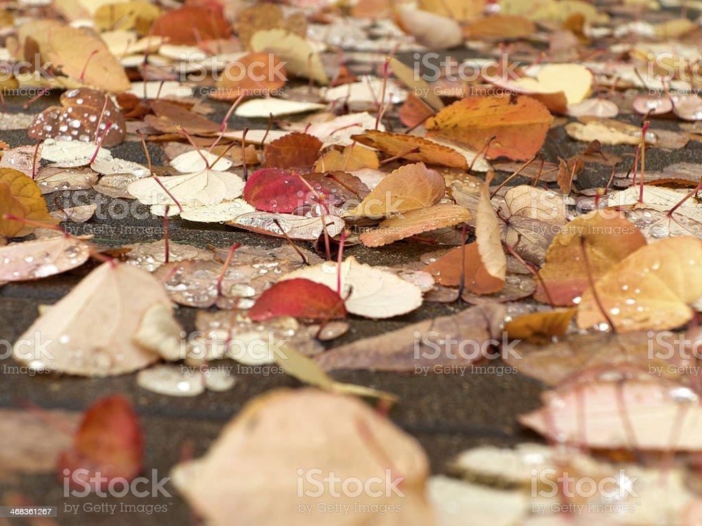 Autumn on the floor royalty-free stock photo