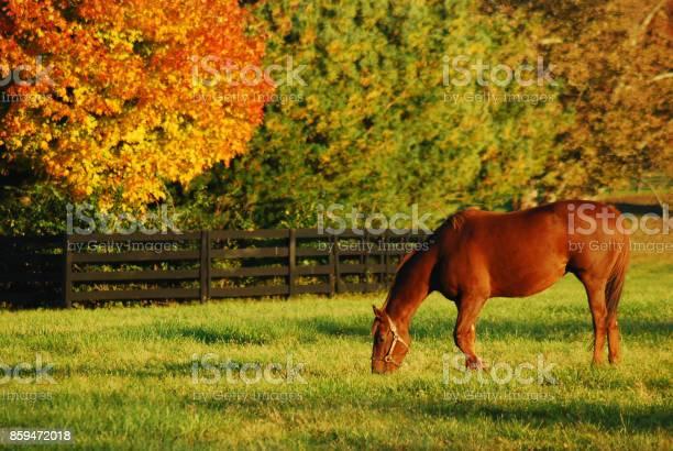 Photo of Autumn on the horse farm