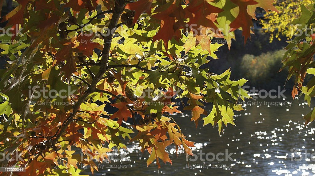 Autumn on the River royalty-free stock photo