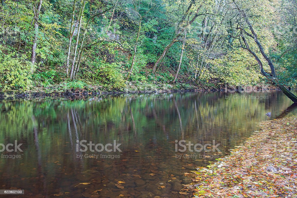 Autumn on the River Ure stock photo