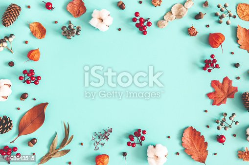 Autumn or winter composition. Dried leaves, cotton flowers on pastel blue background. Autumn, fall, winter concept. Flat lay, top view, copy space