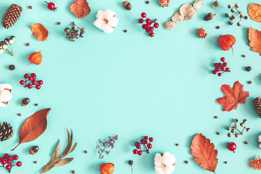 istock Autumn or winter composition. Dried leaves, cotton flowers on pastel blue background. Autumn, fall, winter concept. Flat lay, top view, copy space 1168643515