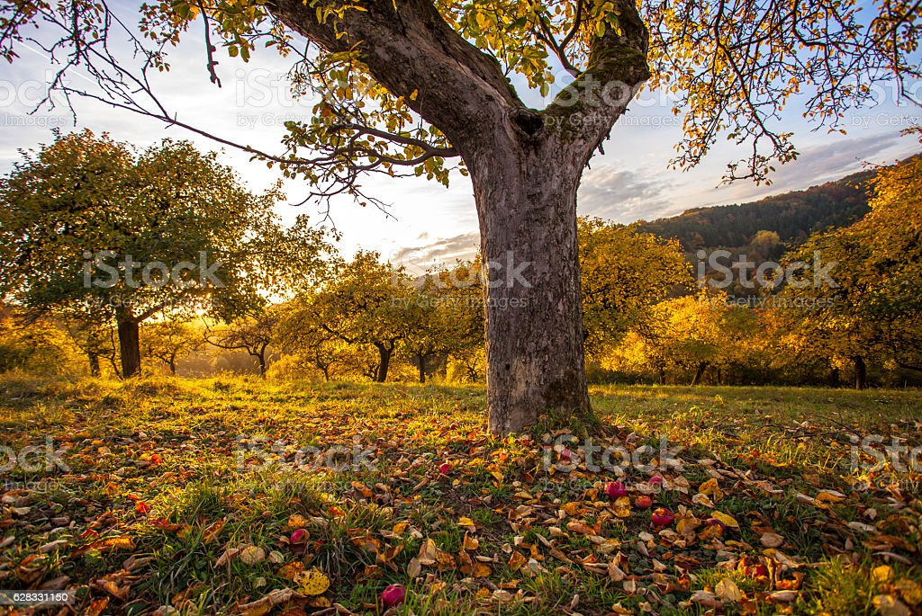 Autumn orchid meadow in autumnal sunset light – Foto