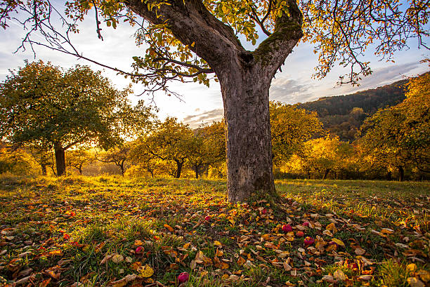 Autumn orchid meadow in autumnal sunset light stock photo