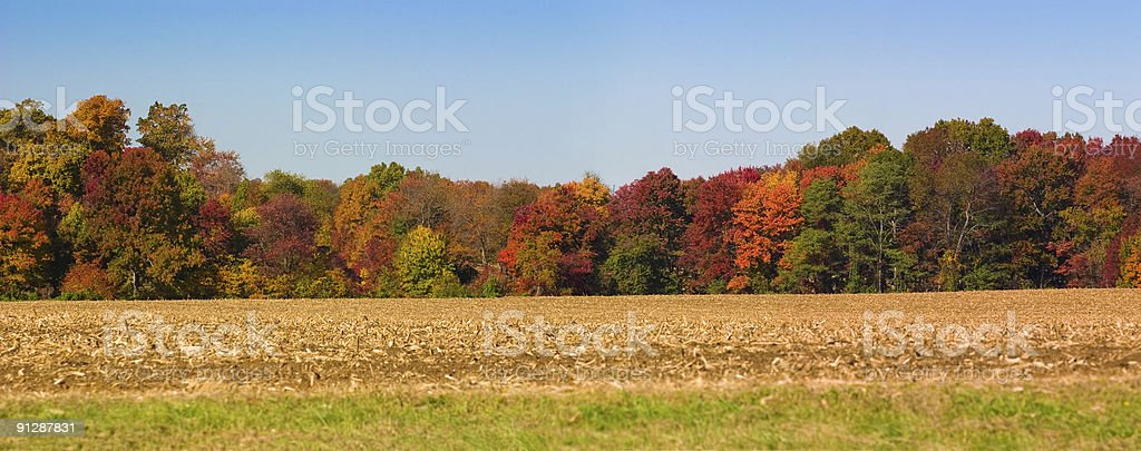 Autumn Panoramic Tree Line Along Cornfield Against Clear Blue Sky stock photo