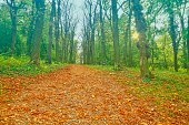 Autumn park alley with trees and orange fallen leaves. Autumn alley in park. Park autumn landscape scene.