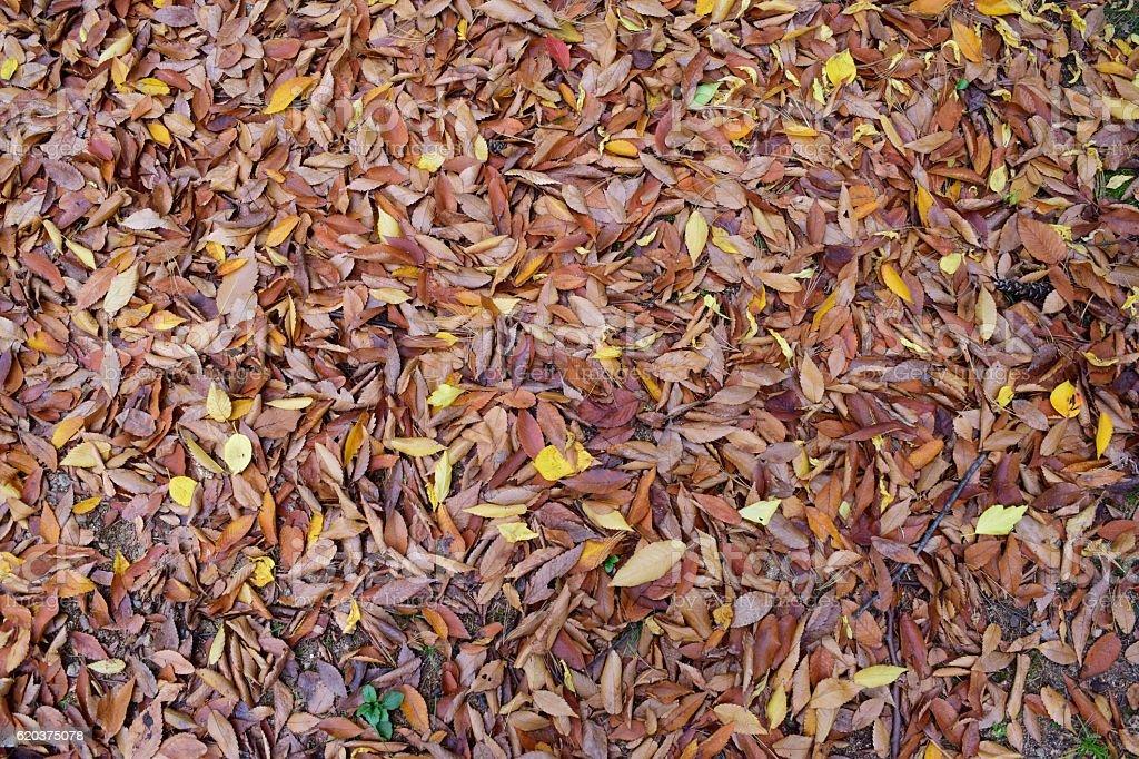 떨어진 낙엽들//autumn park and leaves zbiór zdjęć royalty-free