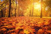 秋の公園。秋の森。