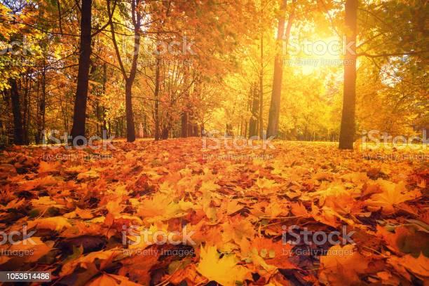 Photo of Autumn park. Autumn forest.