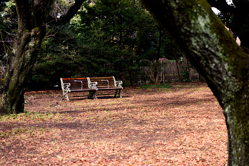 the path and lawn in the city park are covered with fallen yellow leaves, in the background a tree with bare branches