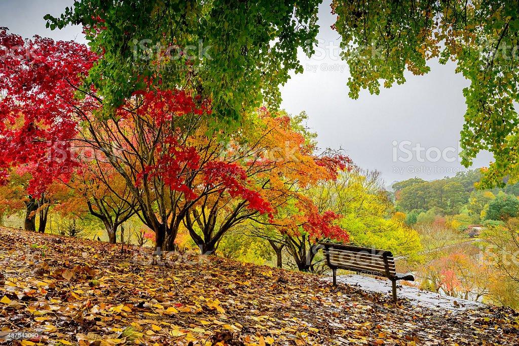 Autumn park during the rain stock photo